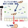 腸に住み着いた、ある口内細菌が腸炎発症に関与?
